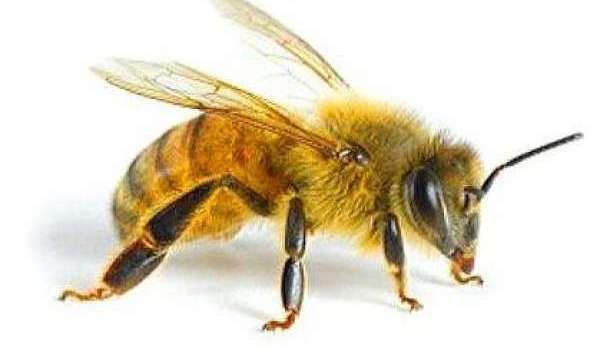 Миллион пчел утонули в собственном меде после ДТП во Франции