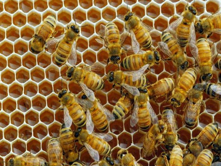 Пчелы предотвратили кражу ульев у британца