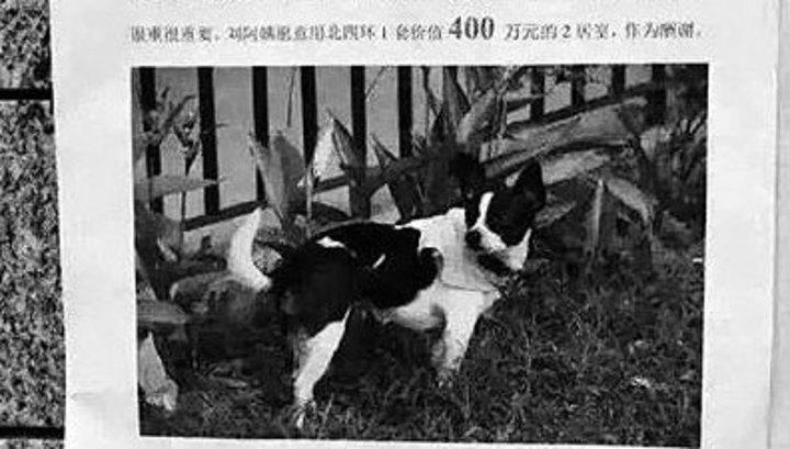 Китаянка готова обменять свой дом на пропавшую собаку