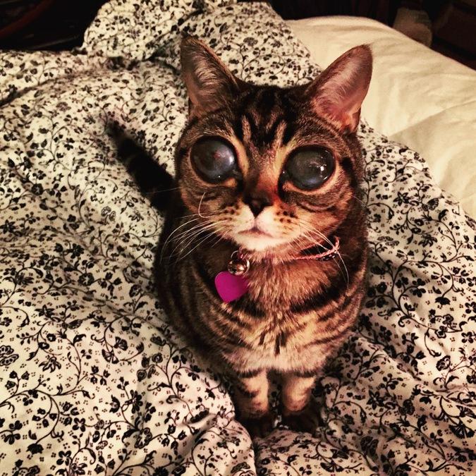 В Британии живет кошка-инопланетянка