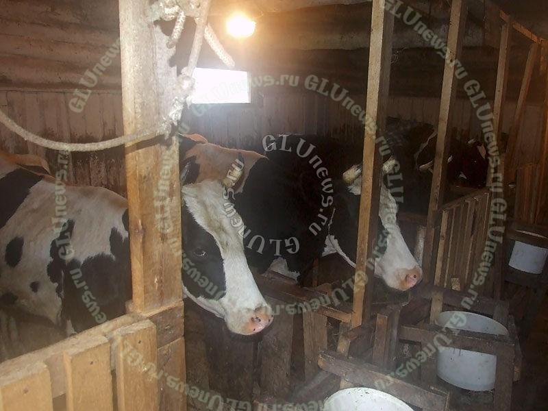 Как правильно сделать стойло для коровы